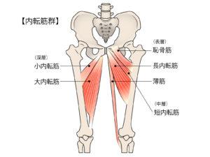 ない点筋群の筋肉図
