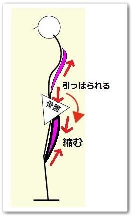 骨盤後傾の解説